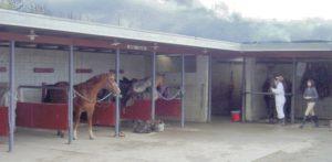 horsephoto16